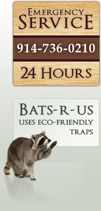 emergency bat and nuisance wildlife removal phone number - 914-906-4706